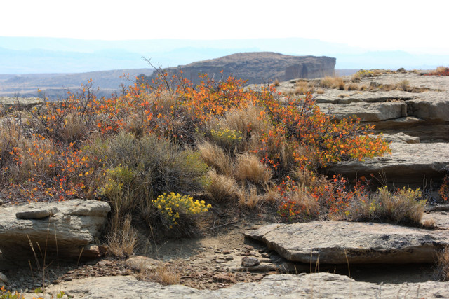View of the neighboring rim rock with colorful foliage.  Midwest, Wyoming