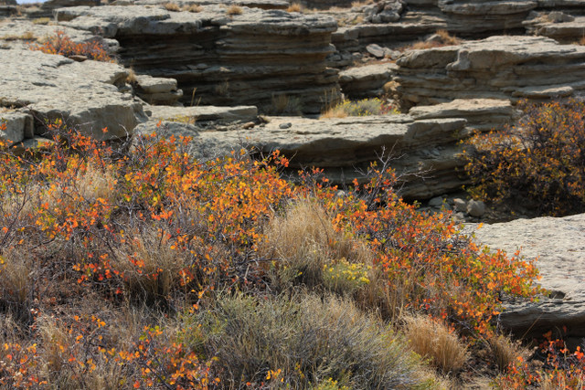 More stacked rock with beautiful fall foliage.  Midwest, Wyoming