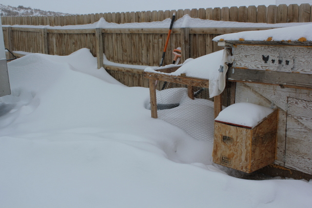 Poor chickens are all cooped up.  Snow more than half way up on a 6' privacy fence.