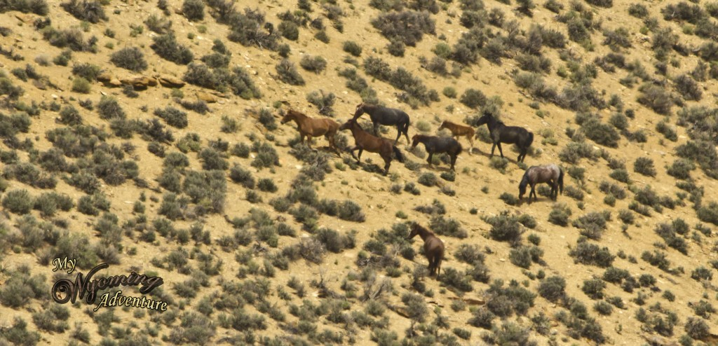These are some of the wild horses that roam the area.